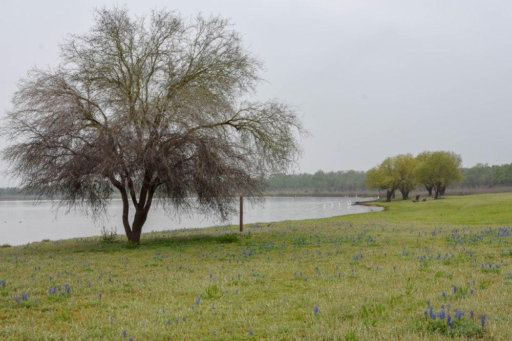 Lake-5