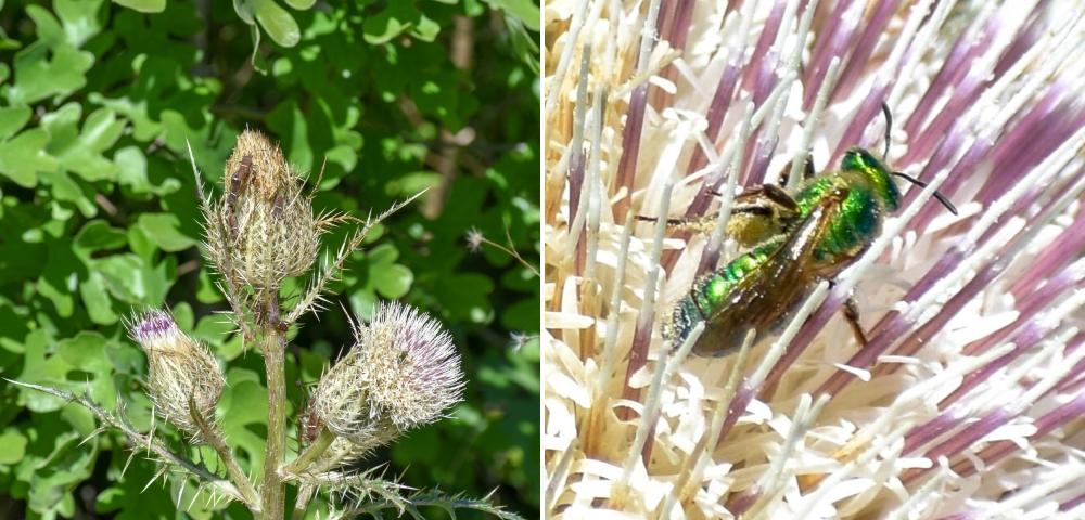 plant and bug